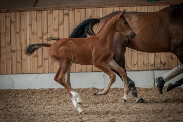 FAQ's: Recipient Mares v's Real Mares